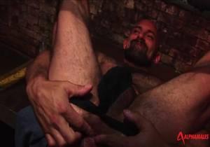 AlphaMales – Hairy Hunx – Rocky Torrez And Carlo Cox